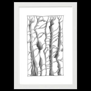 trees white wood frame